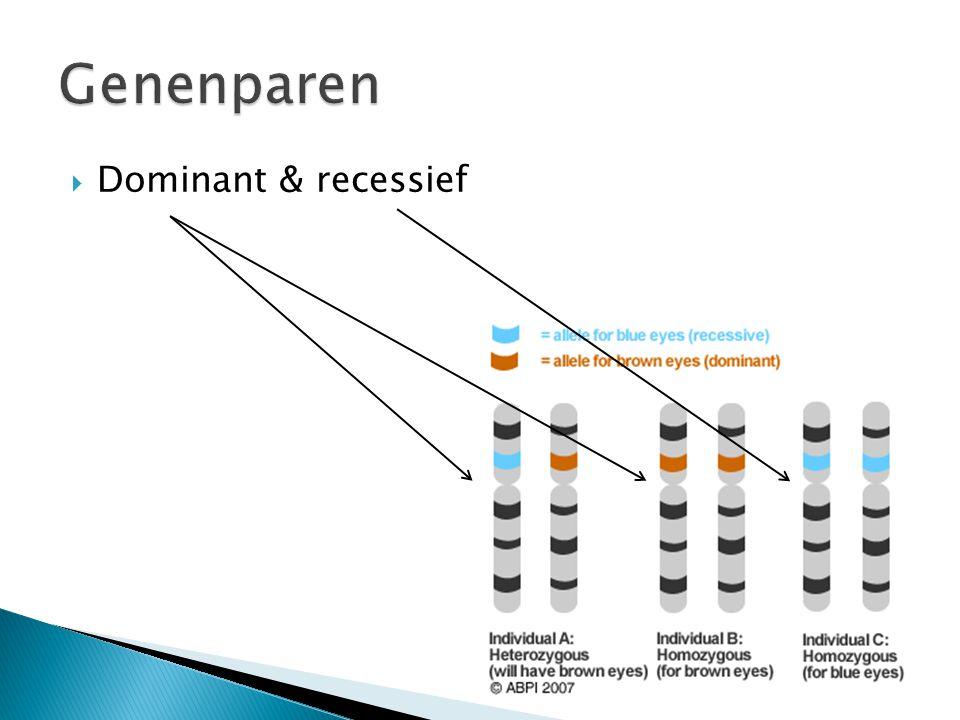 Genenparen Dominant & recessief