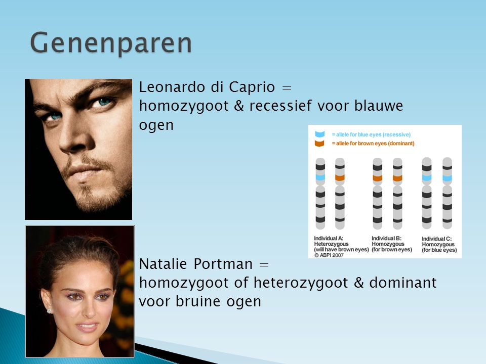 Genenparen Leonardo di Caprio = homozygoot & recessief voor blauwe ogen Natalie Portman = homozygoot of heterozygoot & dominant voor bruine ogen
