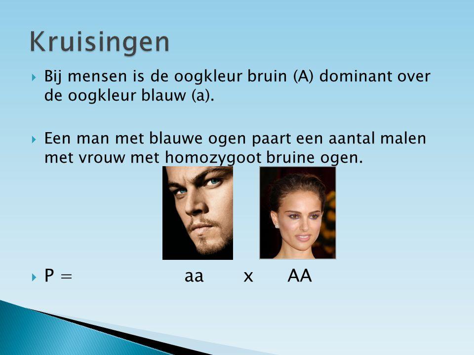 Kruisingen Bij mensen is de oogkleur bruin (A) dominant over de oogkleur blauw (a).