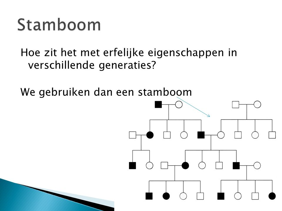 Stamboom Hoe zit het met erfelijke eigenschappen in verschillende generaties.