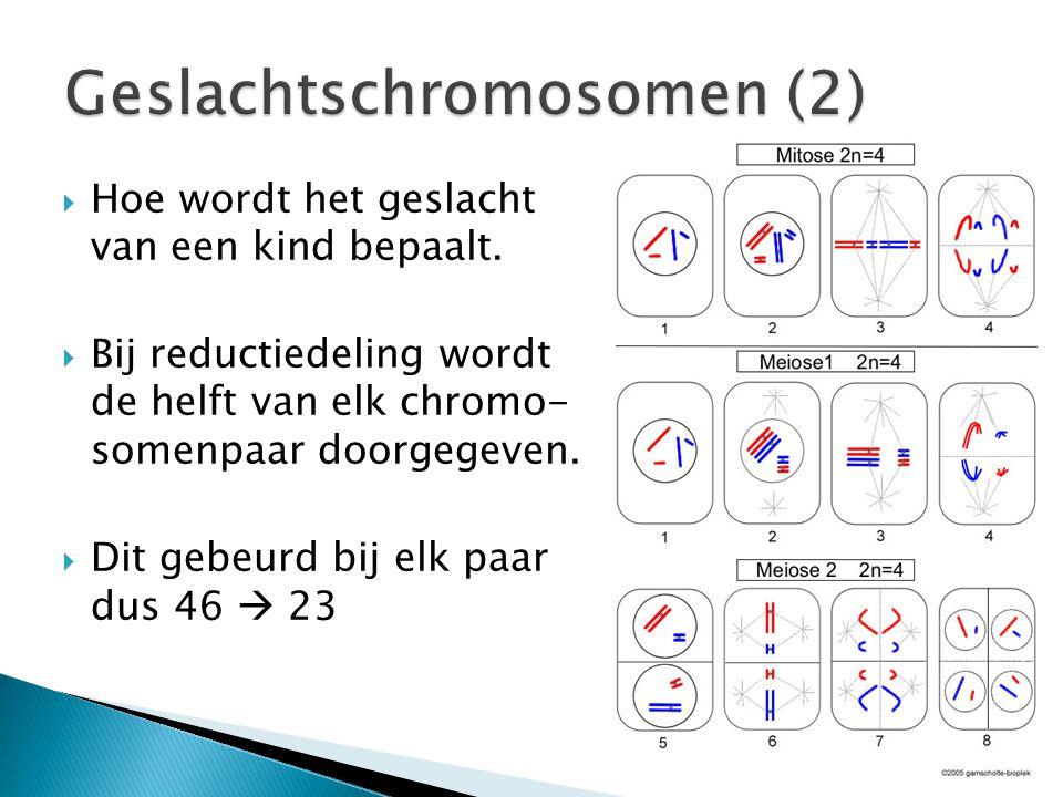 Geslachtschromosomen (2)