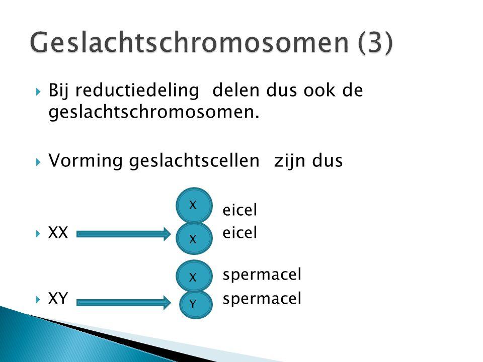 Geslachtschromosomen (3)