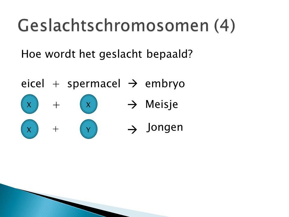 Geslachtschromosomen (4)