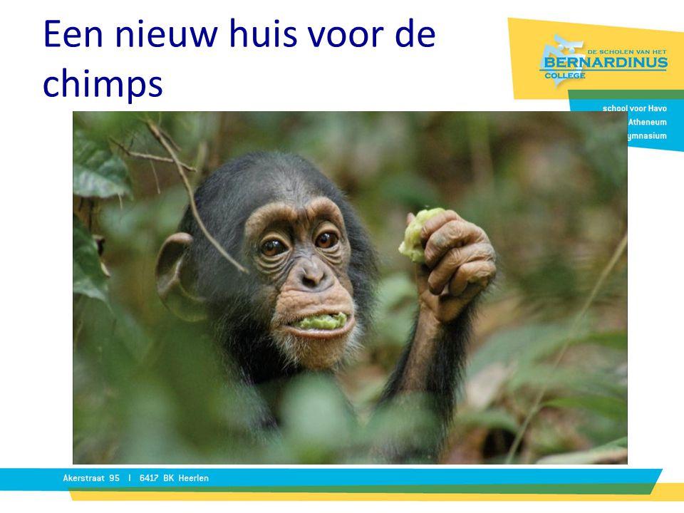 Een nieuw huis voor de chimps Beroep: dierentuinontwerper