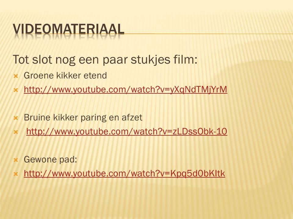 Videomateriaal Tot slot nog een paar stukjes film: Groene kikker etend