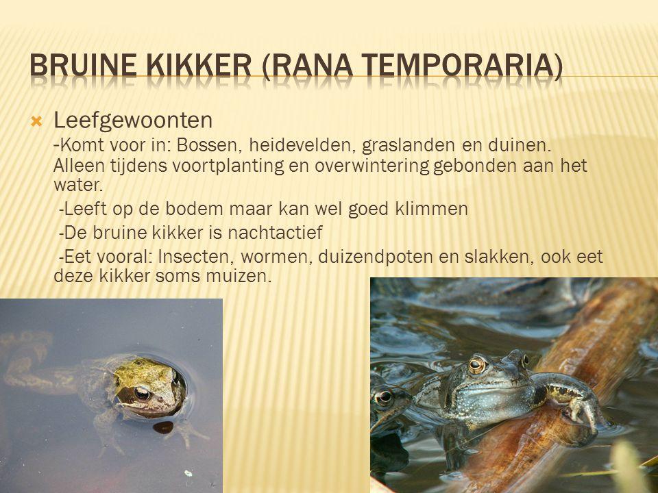 bruine kikker (Rana temporaria)
