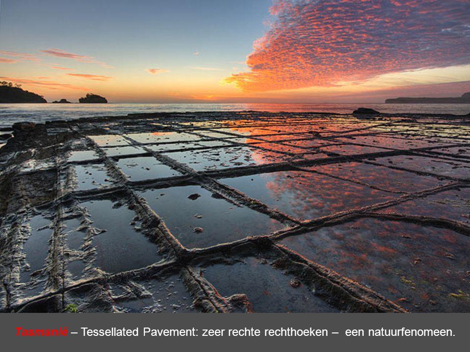 Tasmanië – Tessellated Pavement: zeer rechte rechthoeken – een natuurfenomeen.
