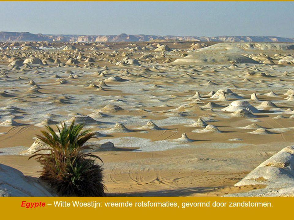Egypte – Witte Woestijn: vreemde rotsformaties, gevormd door zandstormen.