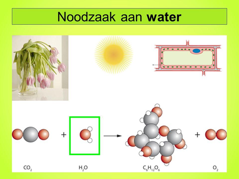 Noodzaak aan water
