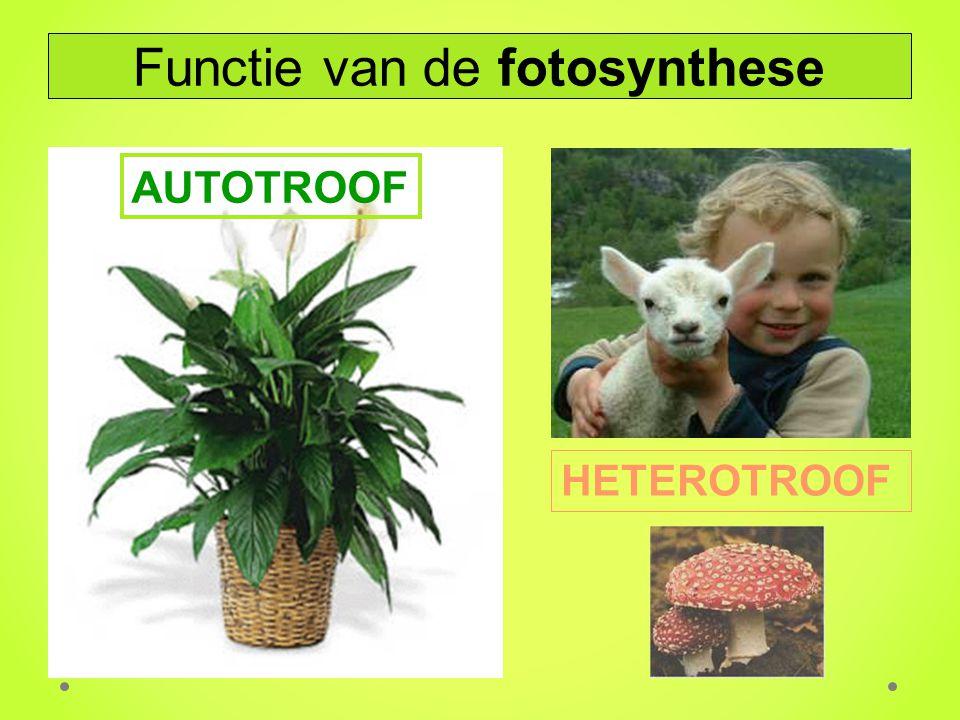 Functie van de fotosynthese