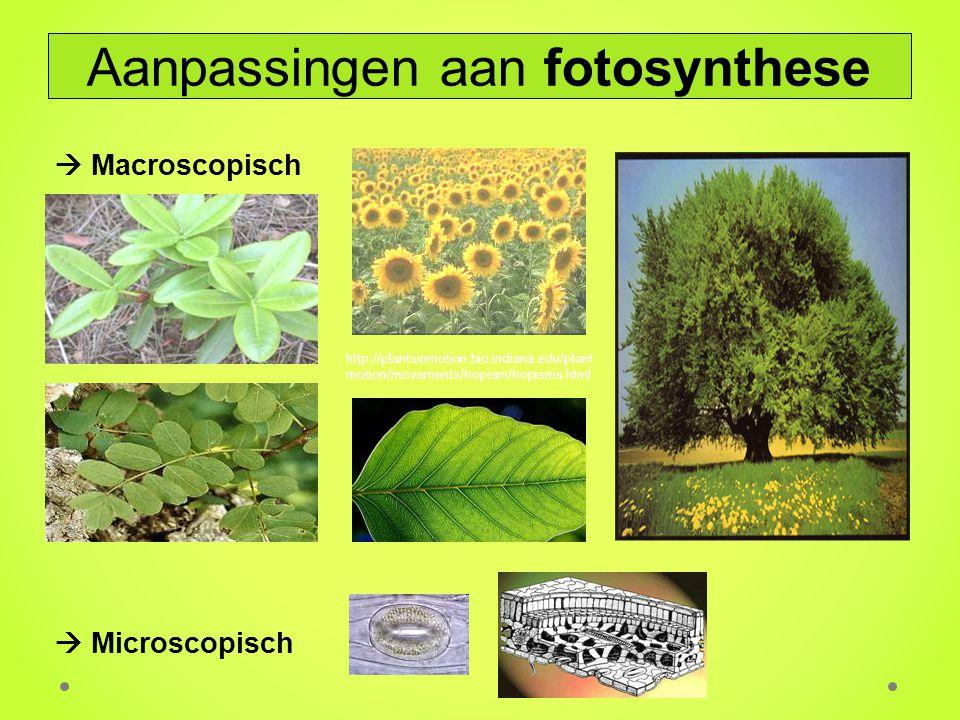 Aanpassingen aan fotosynthese