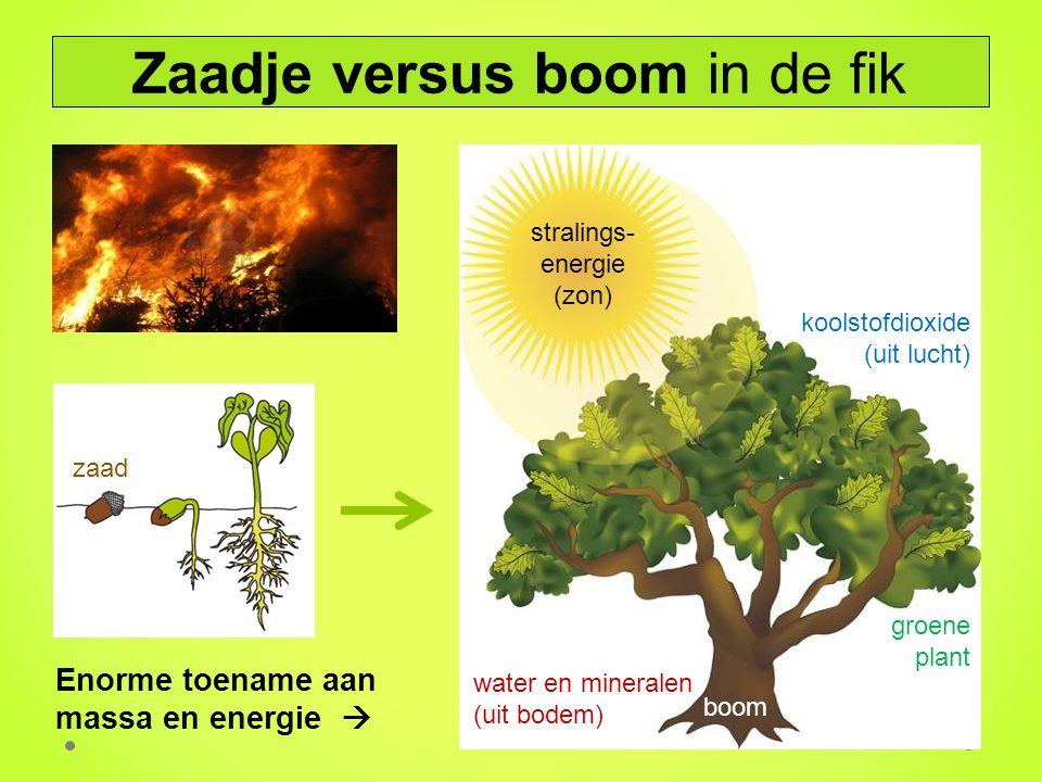 Zaadje versus boom in de fik