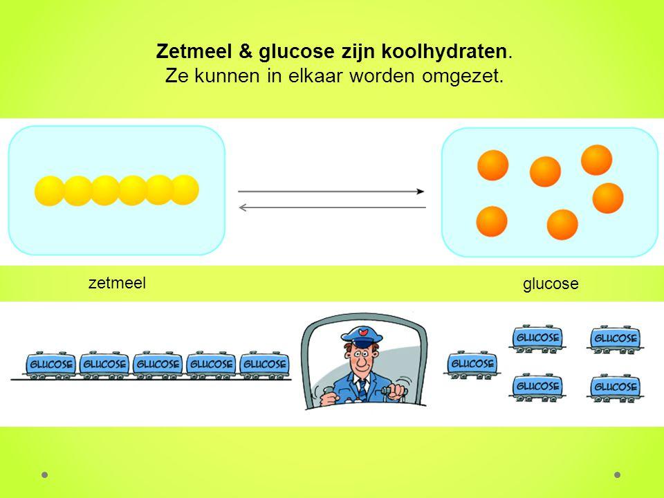 Zetmeel & glucose zijn koolhydraten.