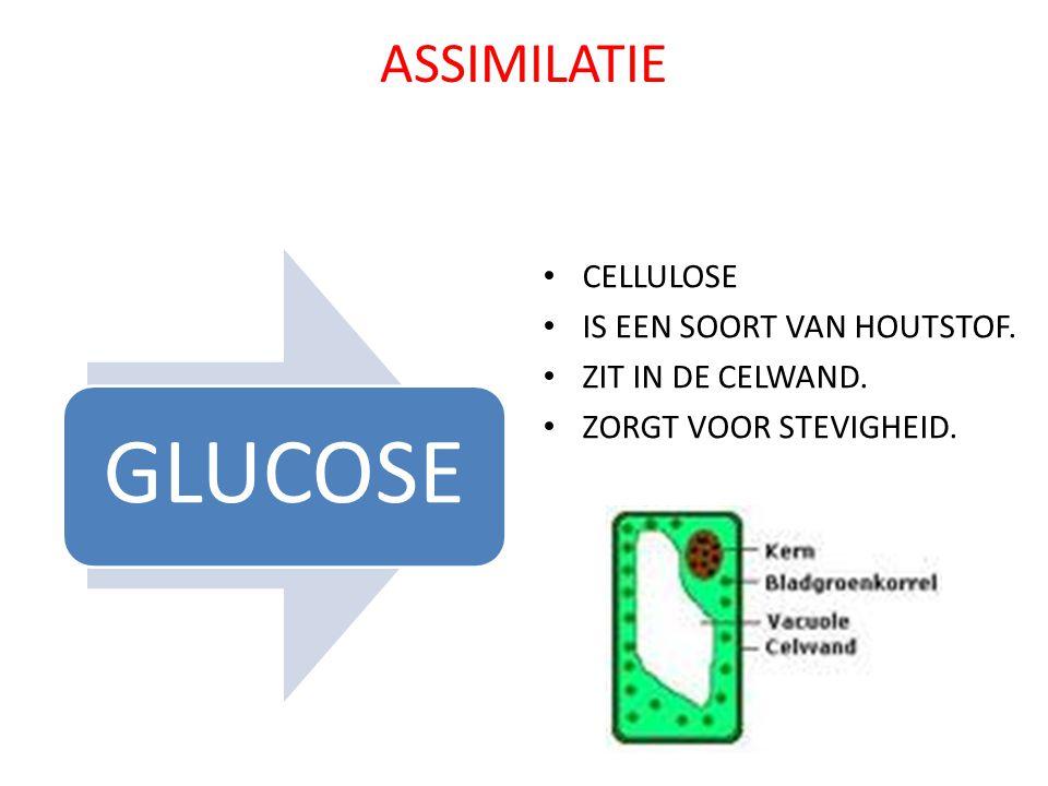 ASSIMILATIE CELLULOSE IS EEN SOORT VAN HOUTSTOF. ZIT IN DE CELWAND.