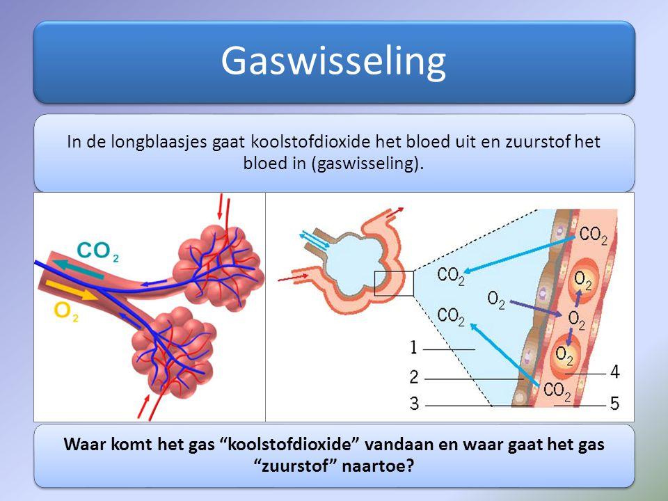 Gaswisseling In de longblaasjes gaat koolstofdioxide het bloed uit en zuurstof het bloed in (gaswisseling).