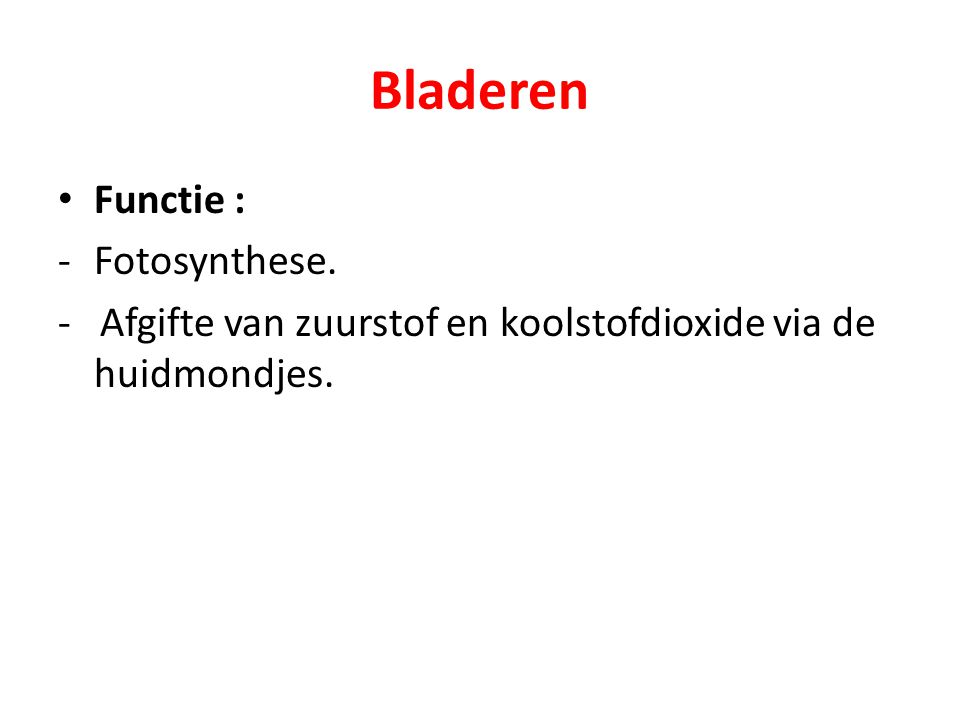 Bladeren Functie : Fotosynthese.