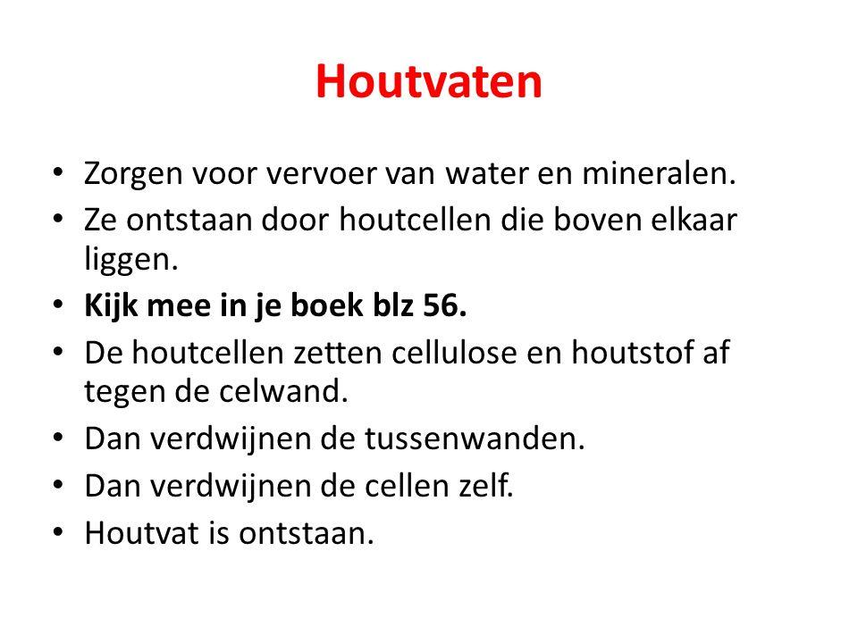 Houtvaten Zorgen voor vervoer van water en mineralen.