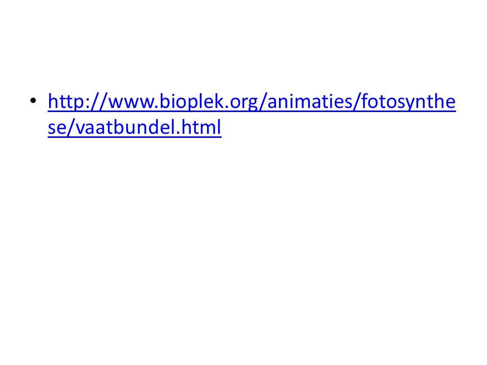 http://www.bioplek.org/animaties/fotosynthese/vaatbundel.html