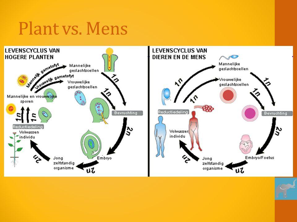 Plant vs. Mens