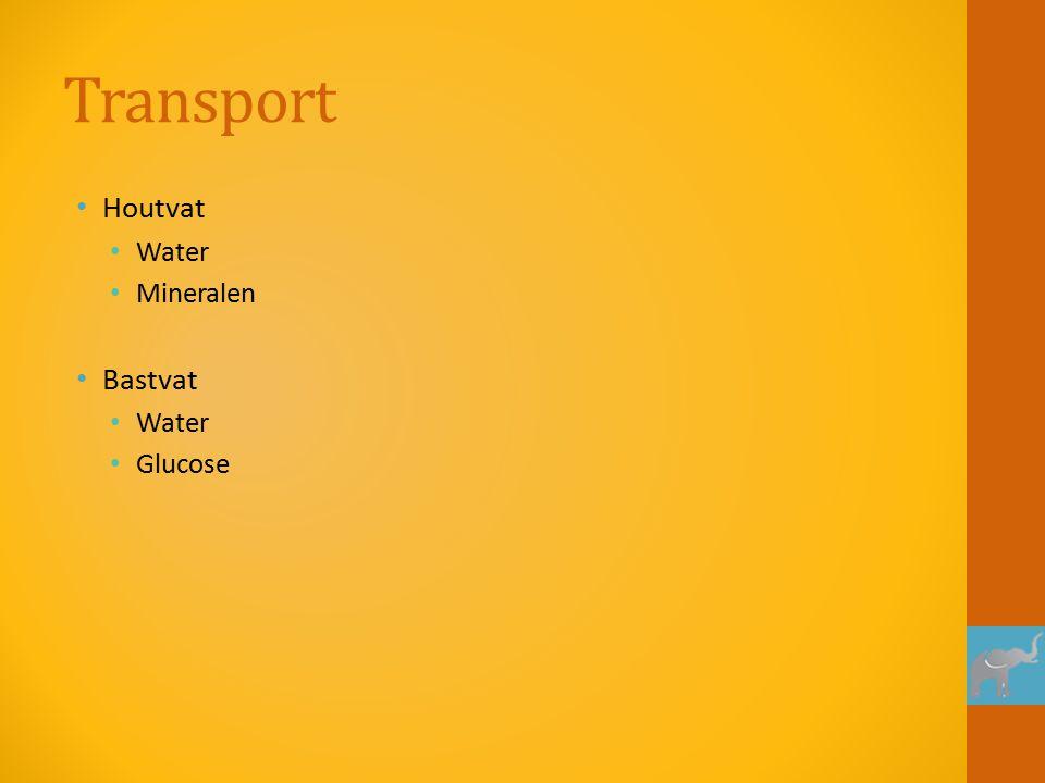 Transport Houtvat Water Mineralen Bastvat Glucose