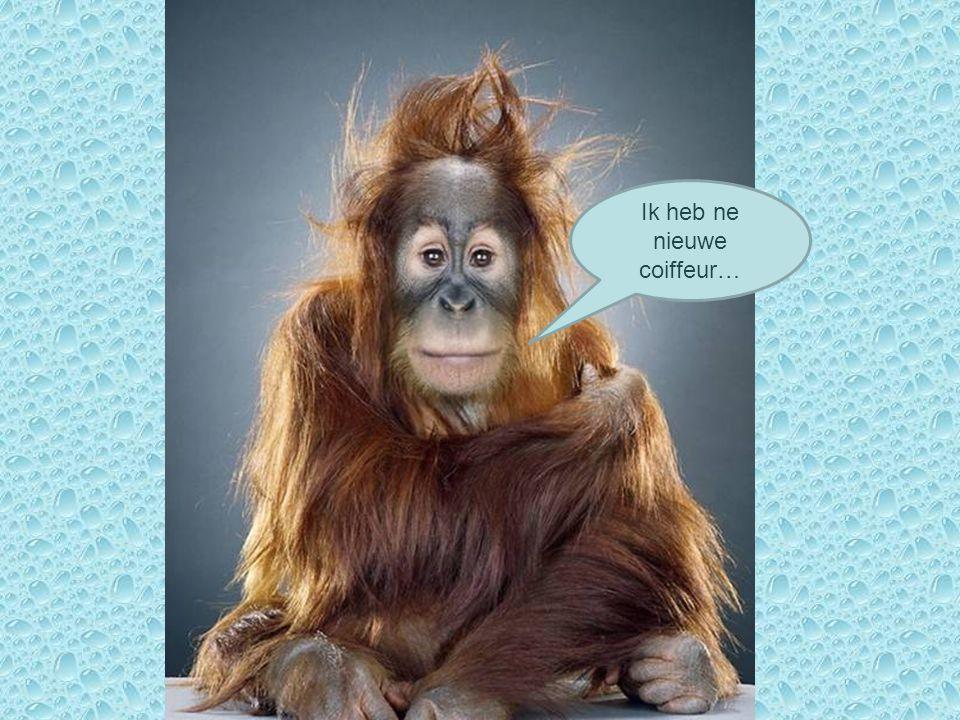 Ik heb ne nieuwe coiffeur…