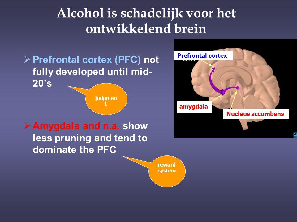 Alcohol is schadelijk voor het ontwikkelend brein