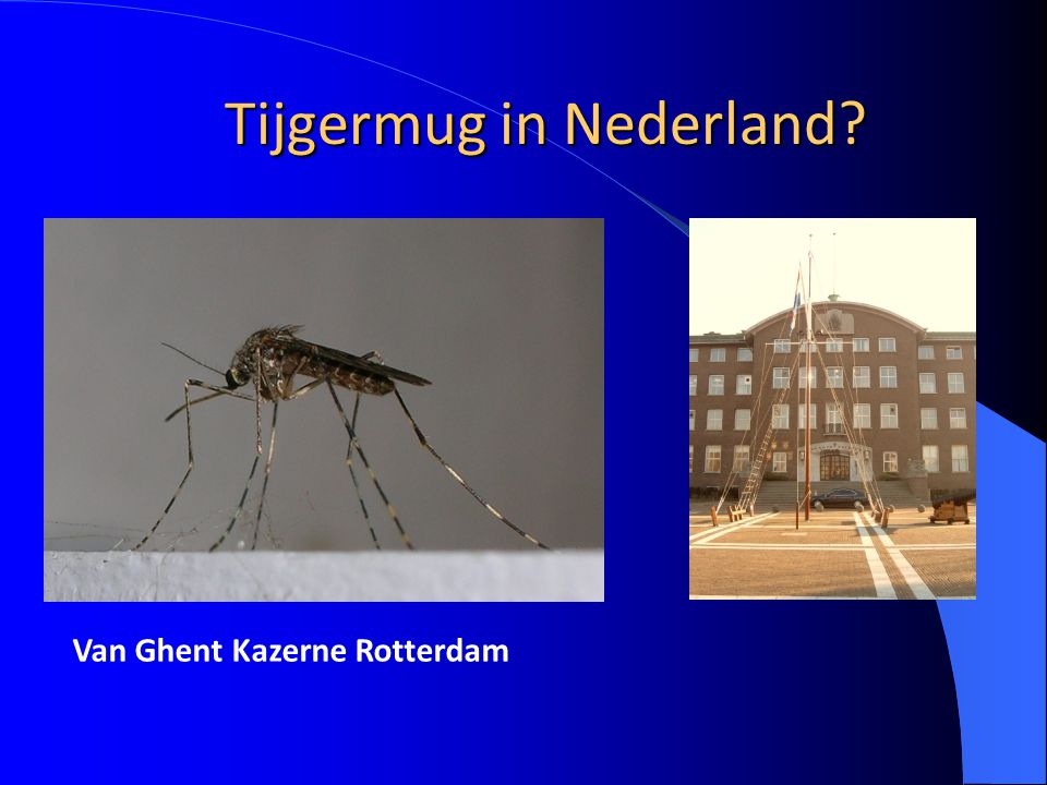 Tijgermug in Nederland
