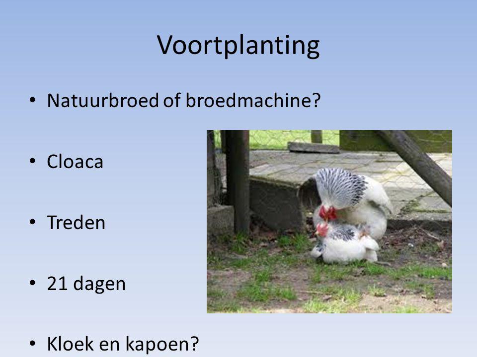 Voortplanting Natuurbroed of broedmachine Cloaca Treden 21 dagen
