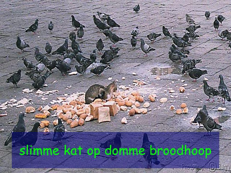 slimme kat op domme broodhoop