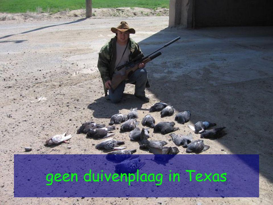 geen duivenplaag in Texas