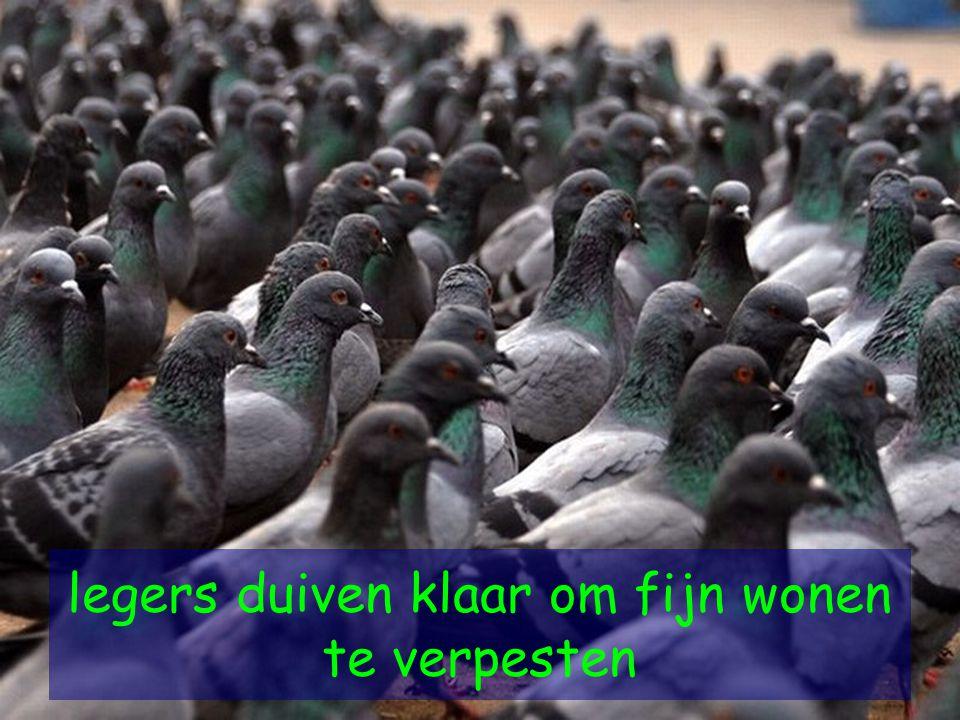 legers duiven klaar om fijn wonen te verpesten