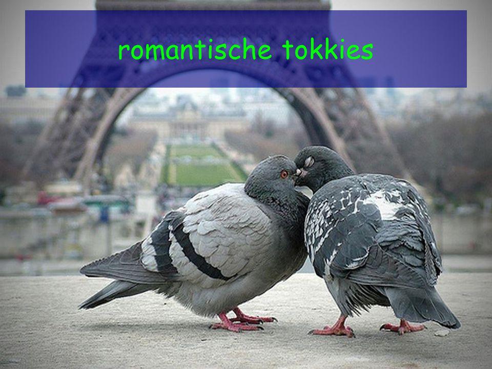 romantische tokkies