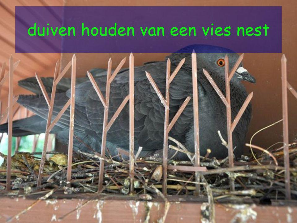 duiven houden van een vies nest