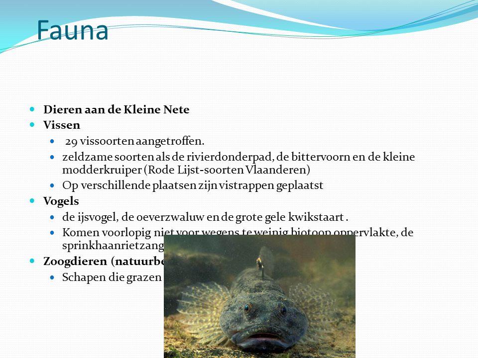 Fauna Dieren aan de Kleine Nete Vissen 29 vissoorten aangetroffen.