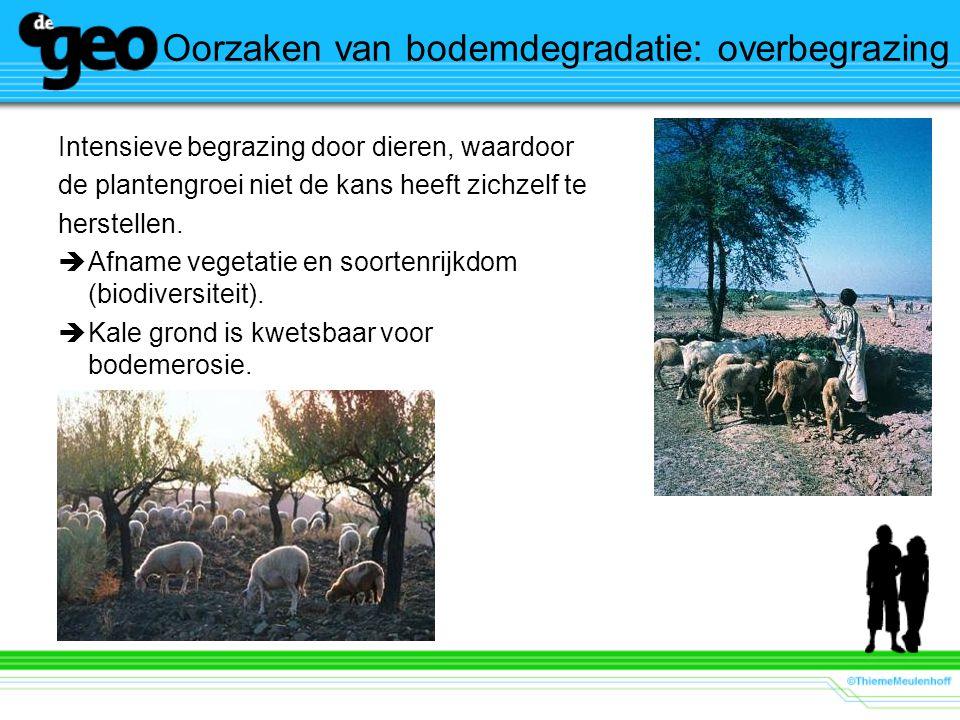 Oorzaken van bodemdegradatie: overbegrazing