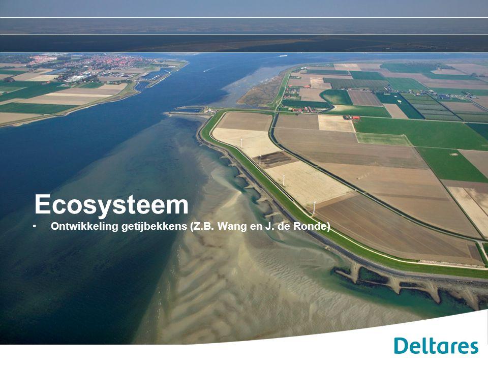 Ecosysteem Ontwikkeling getijbekkens (Z.B. Wang en J. de Ronde)