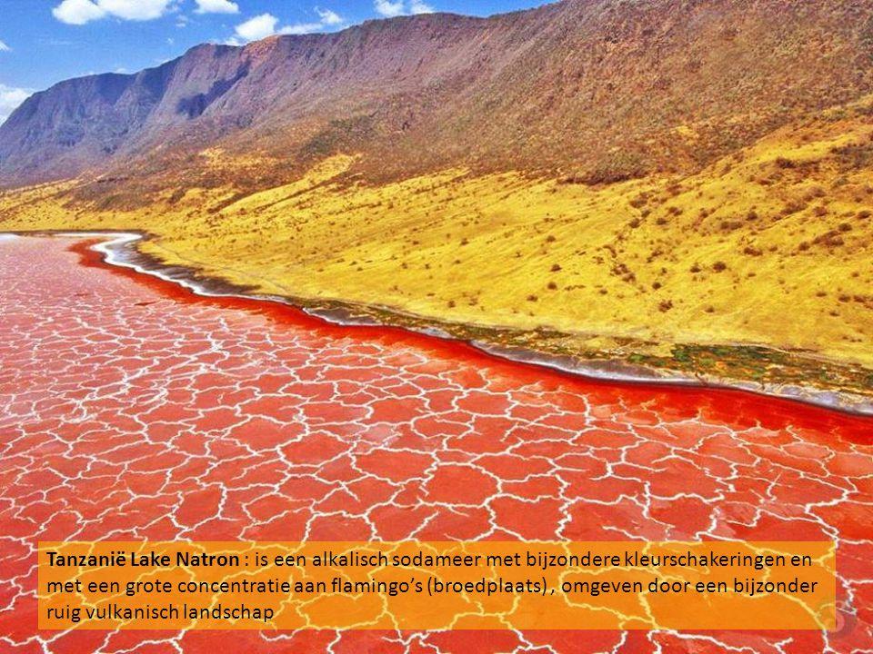 Tanzanië Lake Natron : is een alkalisch sodameer met bijzondere kleurschakeringen en met een grote concentratie aan flamingo's (broedplaats) , omgeven door een bijzonder ruig vulkanisch landschap