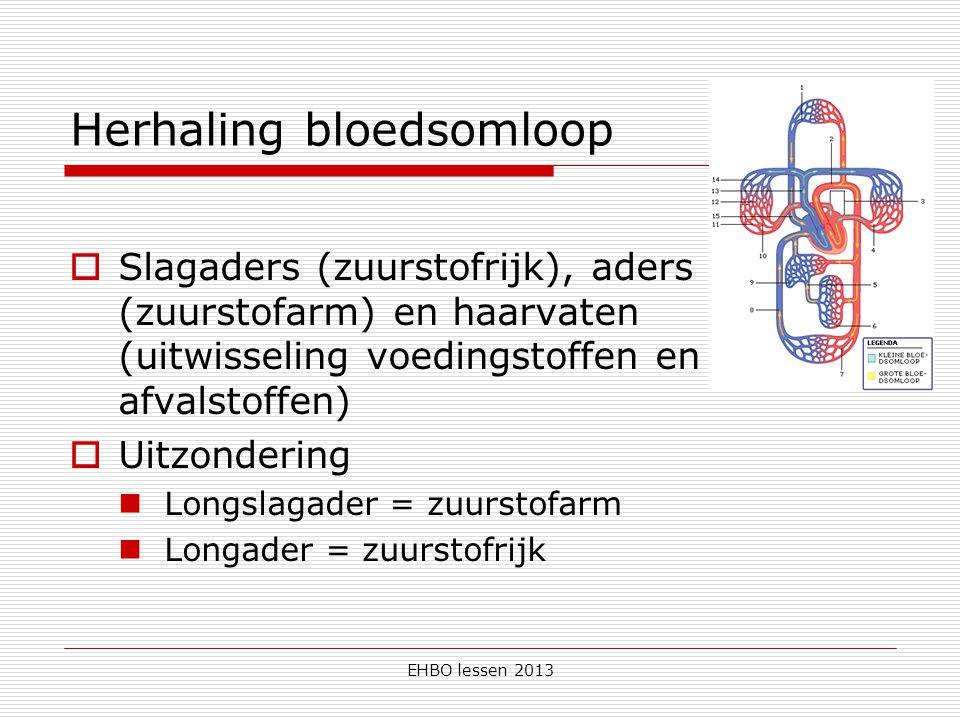 Herhaling bloedsomloop