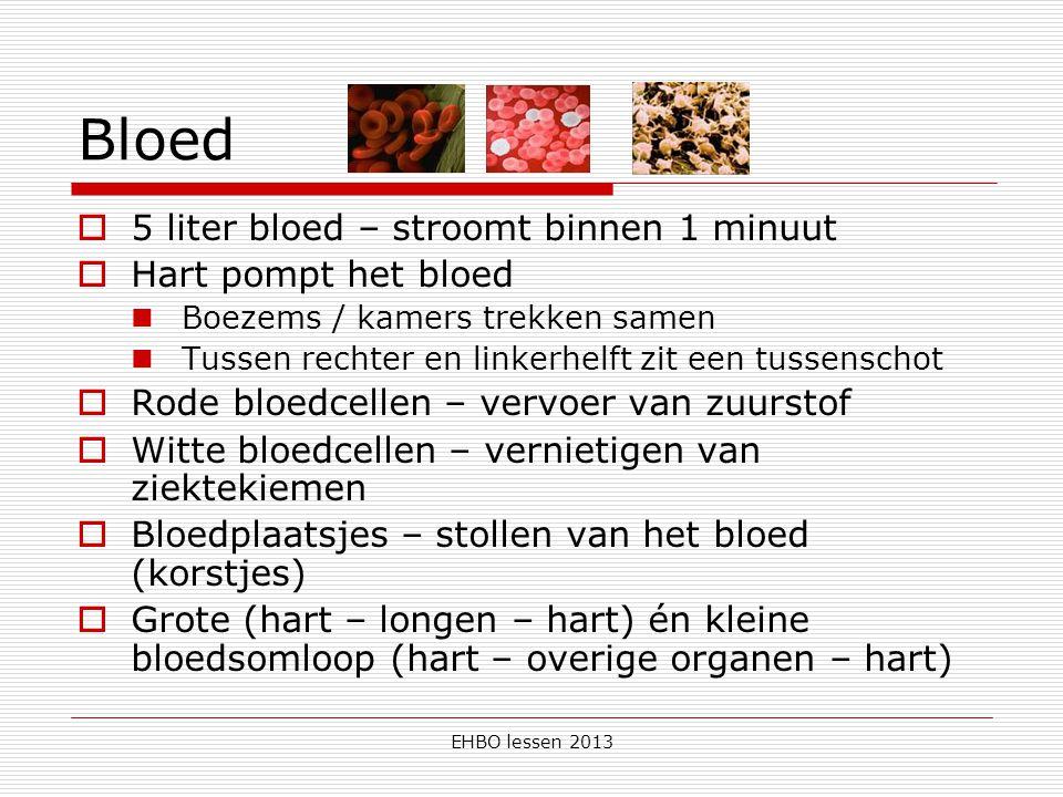 Bloed 5 liter bloed – stroomt binnen 1 minuut Hart pompt het bloed