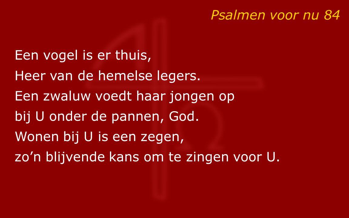 Psalmen voor nu 84 Een vogel is er thuis, Heer van de hemelse legers. Een zwaluw voedt haar jongen op.