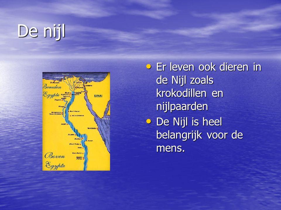 De nijl Er leven ook dieren in de Nijl zoals krokodillen en nijlpaarden.