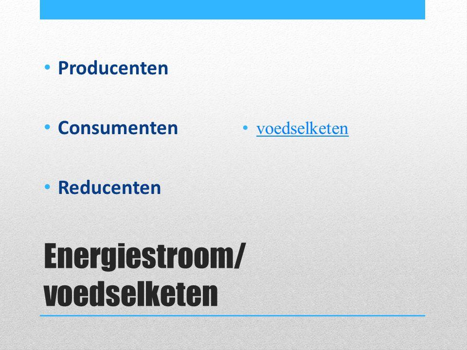 Energiestroom/ voedselketen