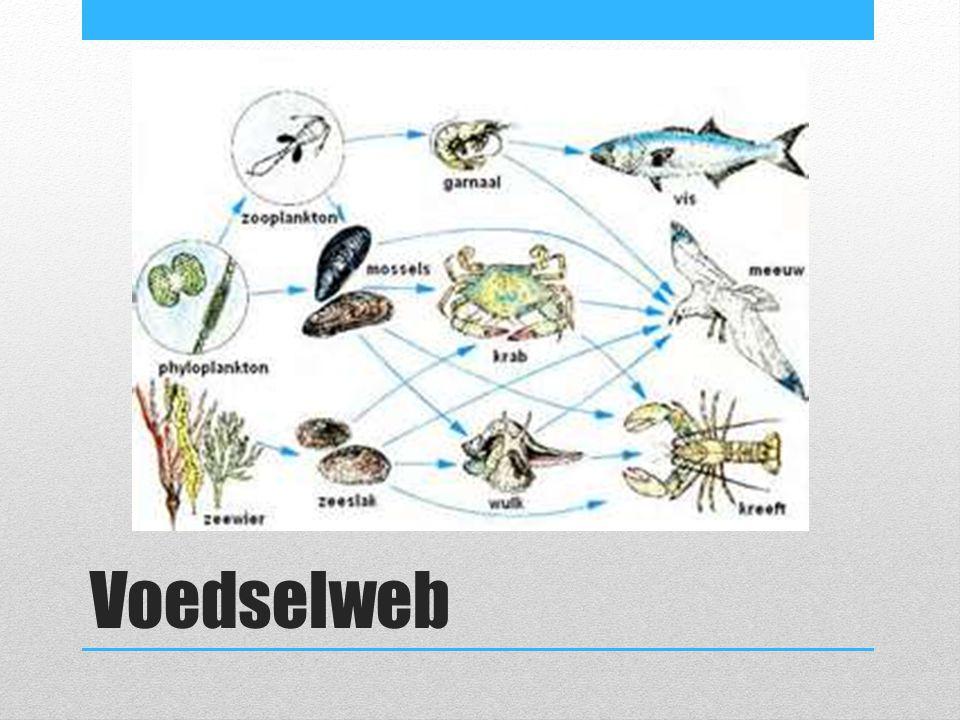 Voedselweb
