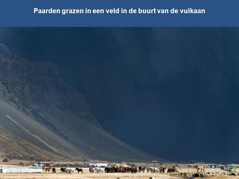 Paarden grazen in een veld in de buurt van de vulkaan