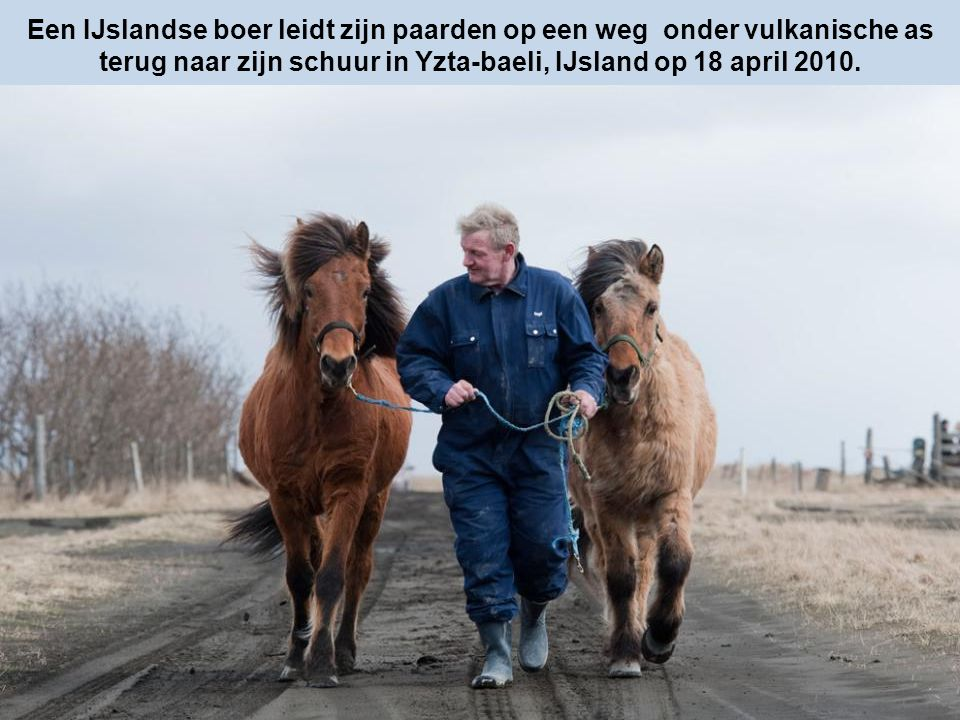 Een IJslandse boer leidt zijn paarden op een weg onder vulkanische as terug naar zijn schuur in Yzta-baeli, IJsland op 18 april 2010.
