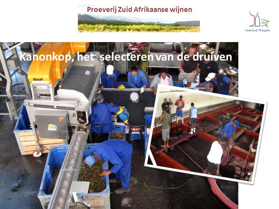 Proeverij Zuid Afrikaanse wijnen