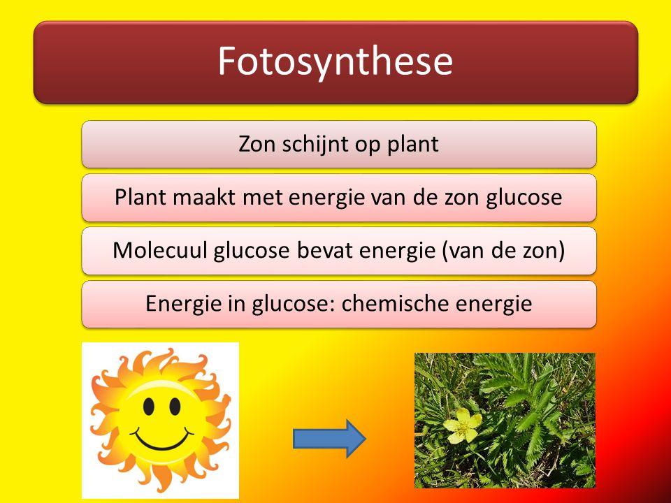 Fotosynthese Zon schijnt op plant