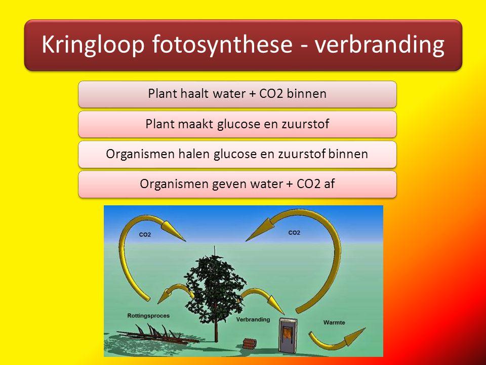 Kringloop fotosynthese - verbranding