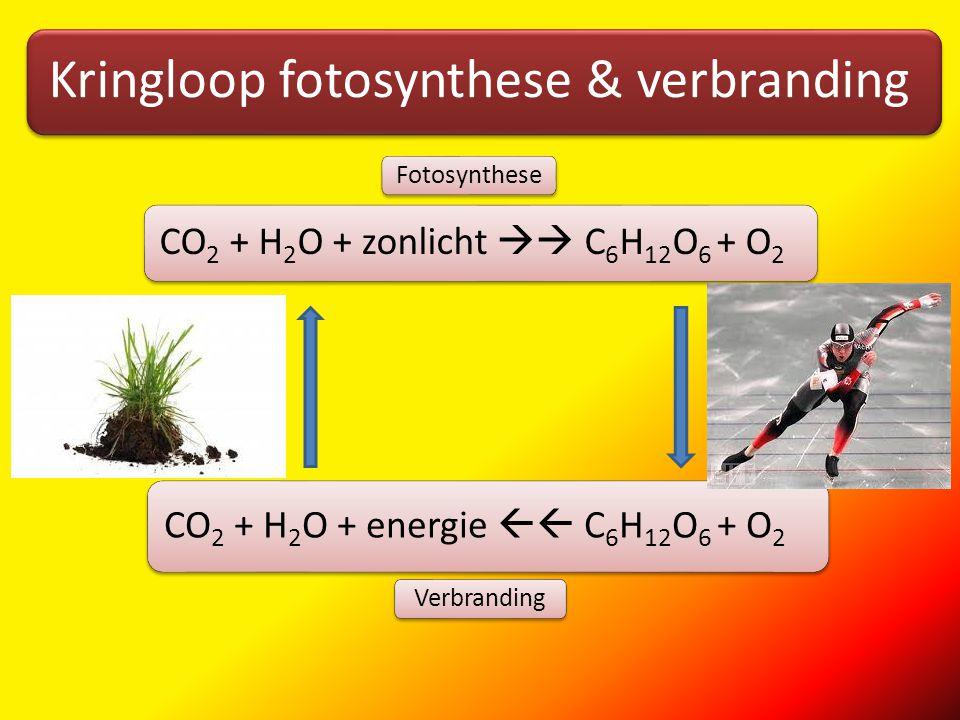 Kringloop fotosynthese & verbranding