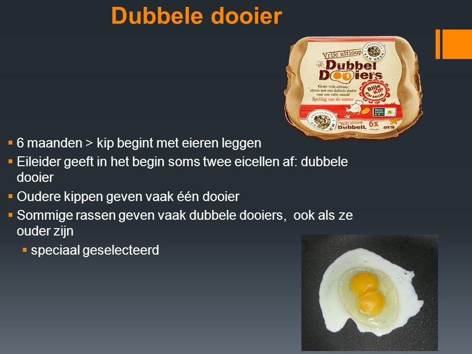 Dubbele dooier 6 maanden > kip begint met eieren leggen